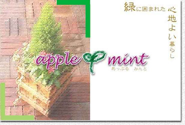 top_applemint%5B3%5D.jpg